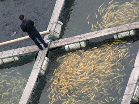 Рыбные фермы Китая могут истощить океаны